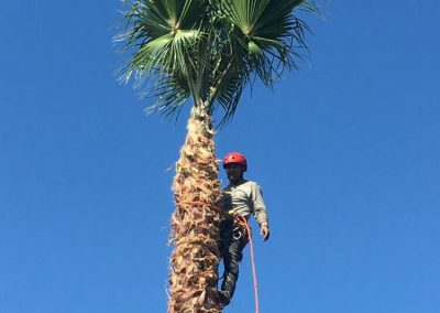 oc tree service photo 6