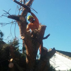 oc tree services images 13