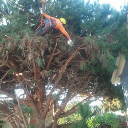 oc tree services images 14