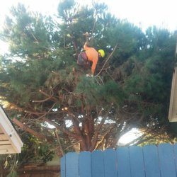 oc tree services images 15
