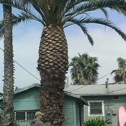 oc tree services palm pineapple
